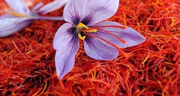 nhuy-hoa-nghe-tay-saffron-shyam-gia-bao-nhieu