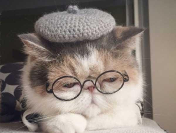 Những điều thú vị về mèo