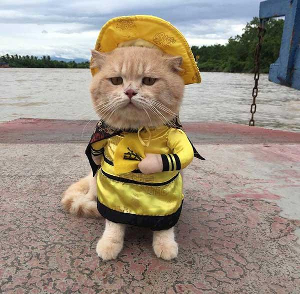 Tìm hiểu về loài mèo