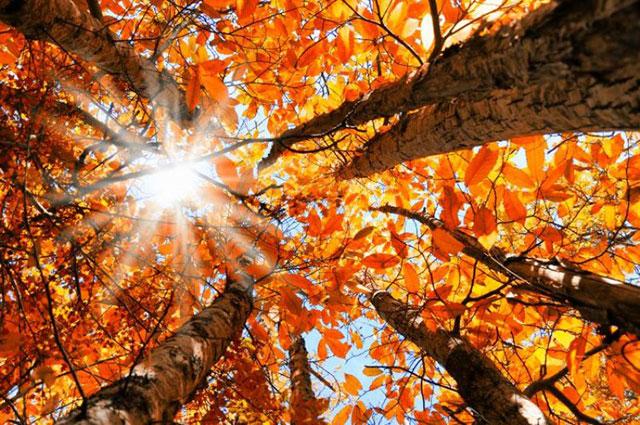 Ánh nắng mùa thu đẹp