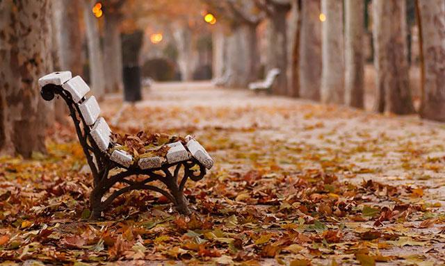 Hình ảnh cảnh đẹp mùa thu