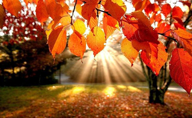 Hình ảnh đẹp mùa thu