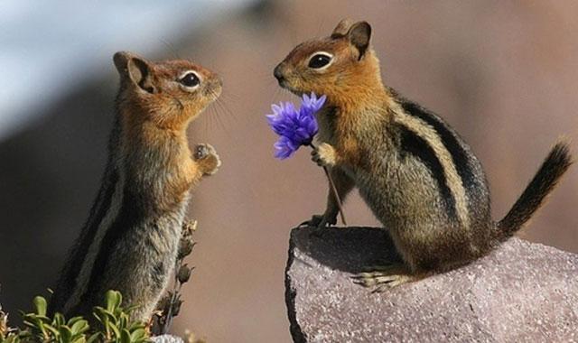 hình ảnh đẹp về động vật