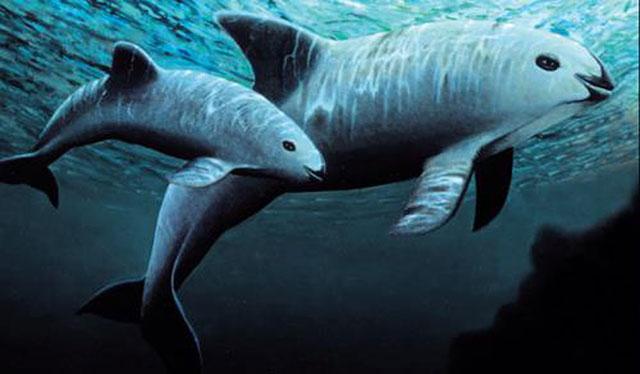 Hình ảnh động vật dưới nước tuyệt đẹp