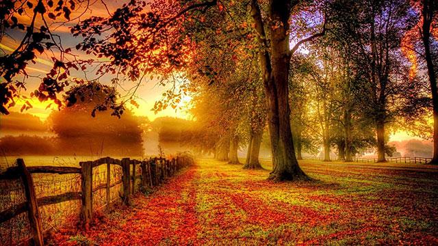 Hình ảnh mùa thu đẹp nhất