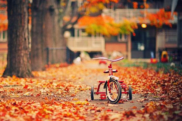 Mùa thu rụng lá đẹp
