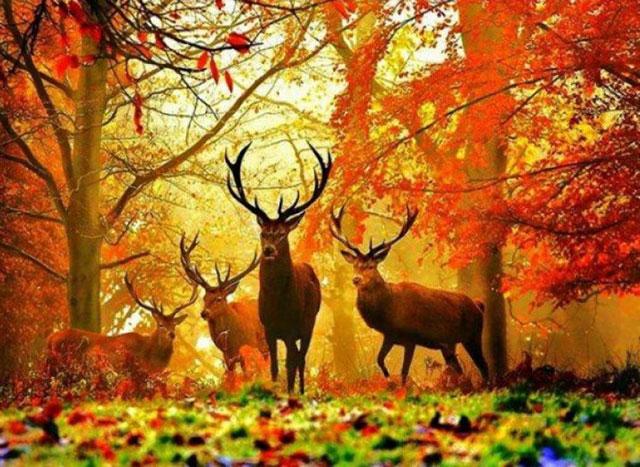 Phong cảnh đẹp mùa thu
