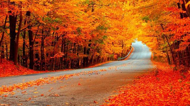 Phong cảnh vào mùa thu