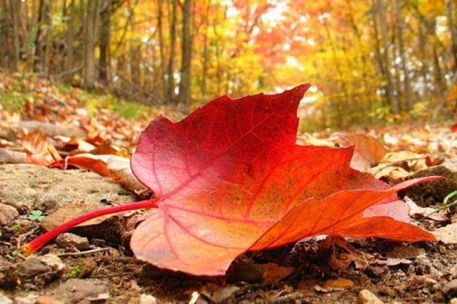 Top mùa thu đẹp nhất
