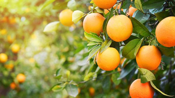 Ích lợi của cam với sức khỏe
