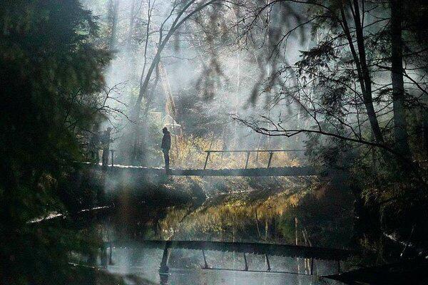 Review phim dạ quỷ rừng sâu