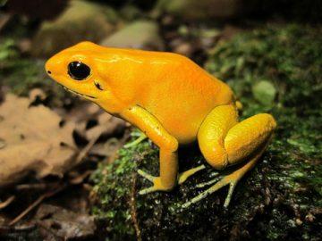 Top 10 sinh vật độc nhất trên thế giới