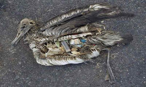 tác hại của rác thải nhựa