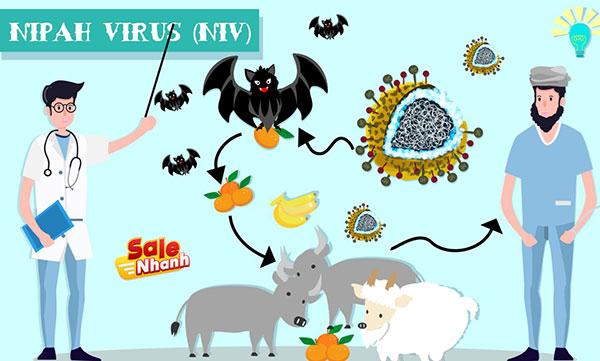 Virus Nipah nguy hiểm như thế nào