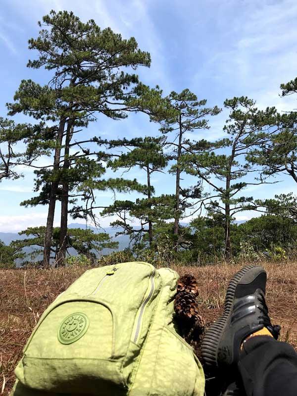 Cắm trại tại rừng Đà Lạt
