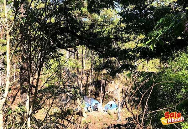 Dựng lều cắm trại