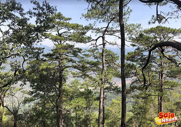 [Review] Du lịch cắm trại rừng Đà Lạt: Sông Lạnh 1